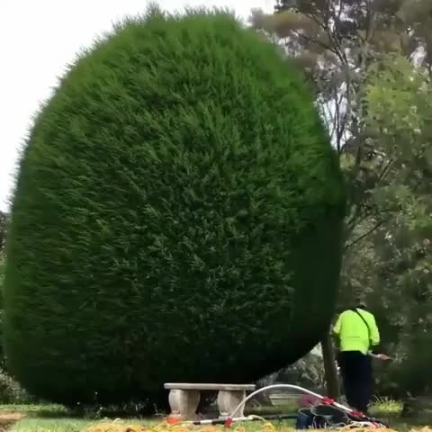 Watch and share Satisfying Power Trimming. GIFs on Gfycat