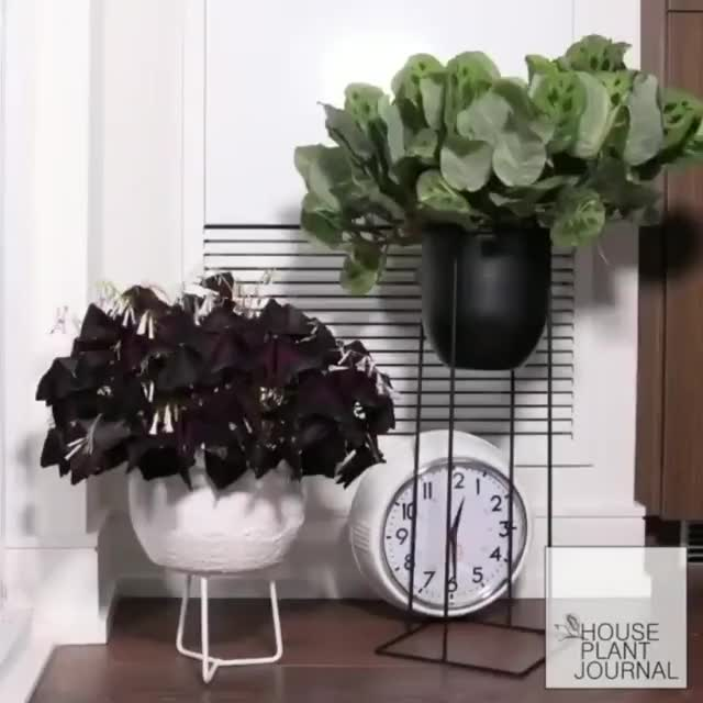 Watch House plant time-lapse GIF by gangbangkang (@gangbangkang) on Gfycat. Discover more related GIFs on Gfycat