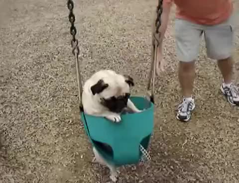 Watch this dog GIF on Gfycat. Discover more bark, dog, doge, doggy, pug, woof GIFs on Gfycat
