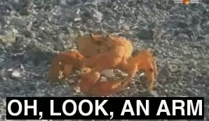 Watch crab GIF on Gfycat. Discover more related GIFs on Gfycat