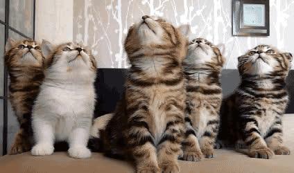 kittens, kittens-gif GIFs