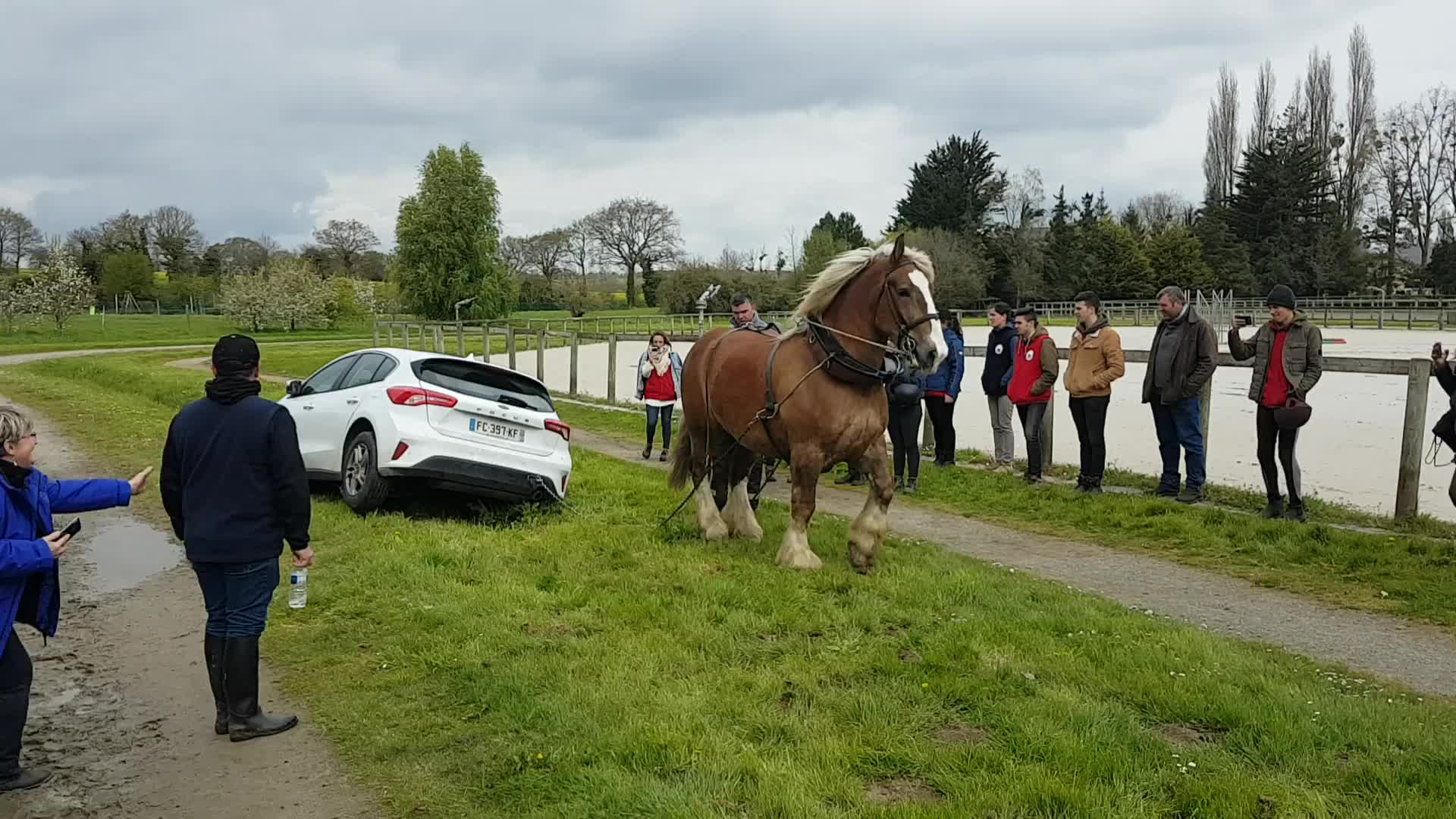 horse, horsepower, tippytaps, Dépannage pendant les Equi Trait de jeune Lamballe 2019 GIFs