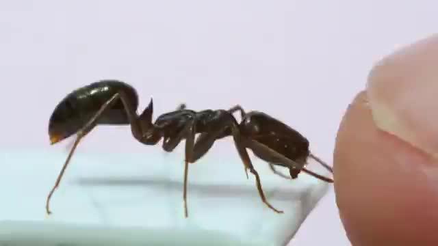 ant, ants, lol GIFs