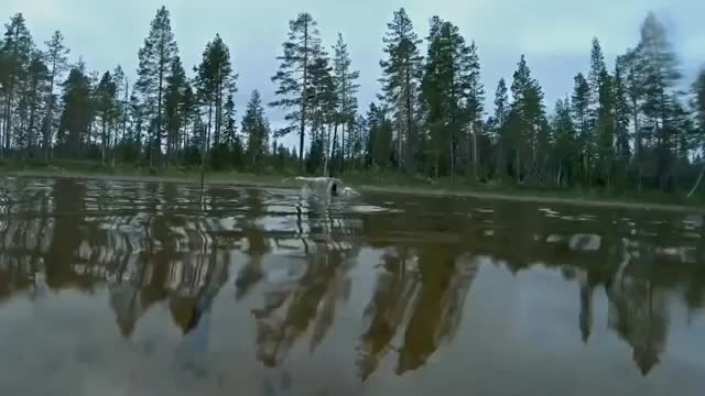 fish, nature, Pike inhales a smaller fish GIFs