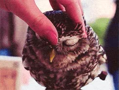 Watch owl GIF on Gfycat. Discover more related GIFs on Gfycat