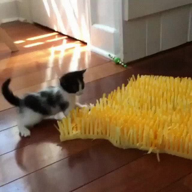 Watch kittensmat.gif GIF on Gfycat. Discover more related GIFs on Gfycat