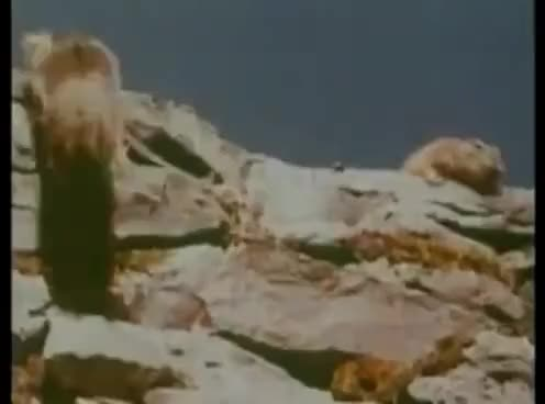 Watch and share Lemmings Jumping Off Cliffs GIFs on Gfycat