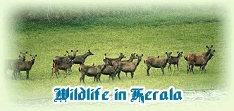 Watch and share Wildlife In Kerala GIFs on Gfycat