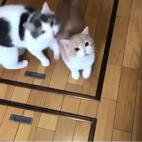 Watch and share Cats GIFs and Cat GIFs by Koleandra on Gfycat