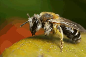 Watch and share Bees GIFs and Bee GIFs on Gfycat