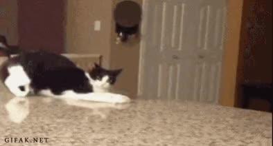 Watch and share Startled Cat GIFs by RandomCatGifs on Gfycat