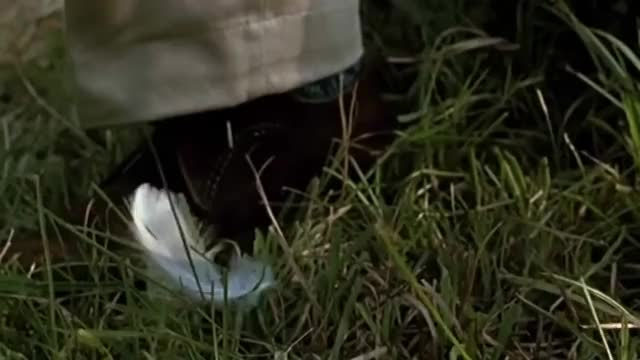 Watch Forrest Gump - Feather ending GIF on Gfycat. Discover more ending, feather, scene GIFs on Gfycat