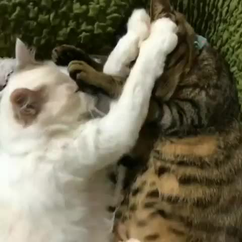 cat nap, aww, funny, Time out GIFs