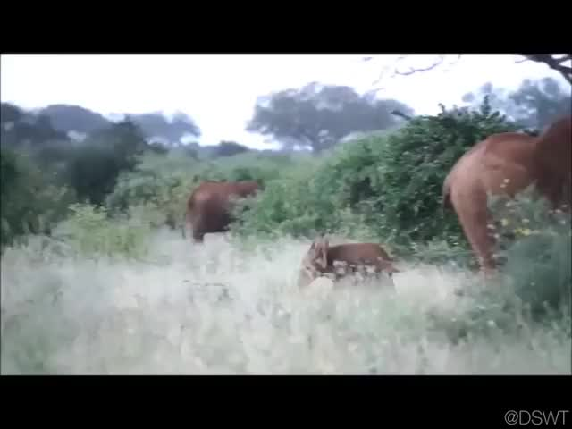 Watch and share Video By Dswt GIFs by awkwardtheturtle on Gfycat