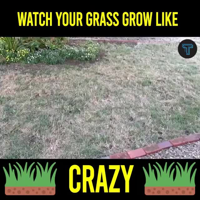 Watch and share Dec Liquid Spray Lawn Seeder GIFs by Nikkie Cinco Munda on Gfycat