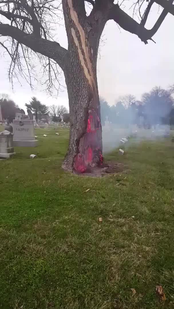 Watch this GIF on Gfycat. Discover more NatureIsFuckingLit, gifs GIFs on Gfycat
