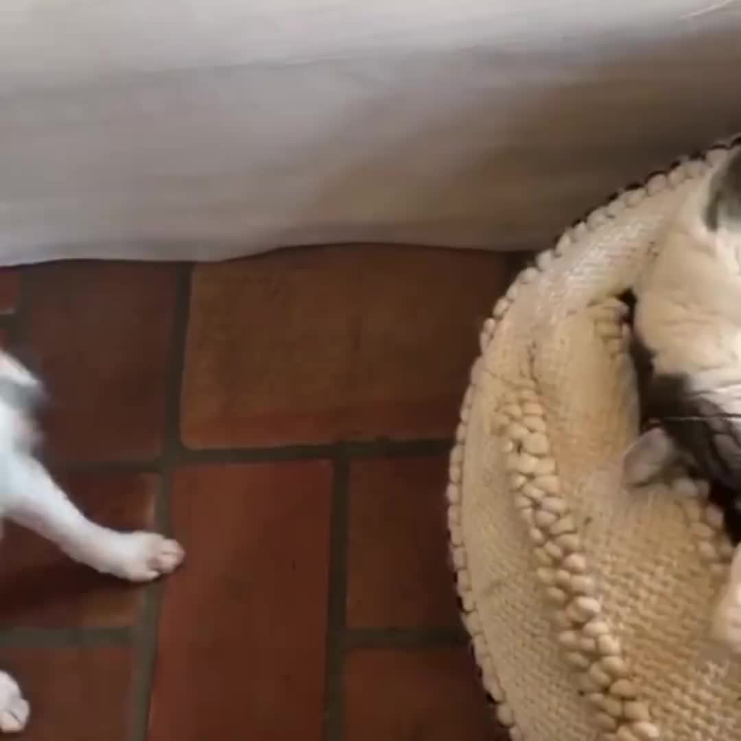 Newsflare, cat, dog, newsflare, When you've had a long day and your kid won't leave you alone 😂 GIFs