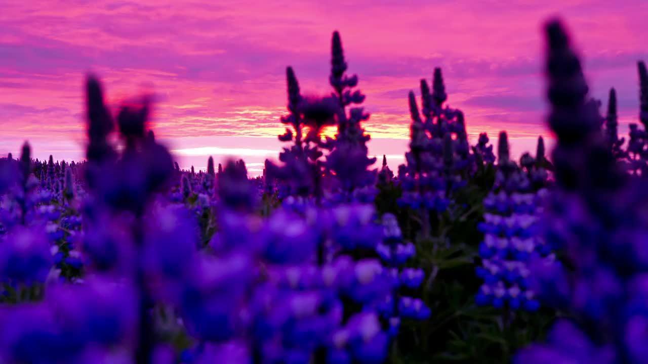 earthgifs, Midnight Sun | Iceland - 4K GIFs