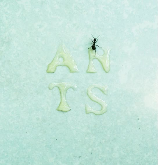 Watch this ant GIF on Gfycat. Discover more ant, ants GIFs on Gfycat