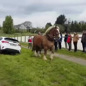 Watch and share Nature GIFs and Horse GIFs by gumus33 on Gfycat