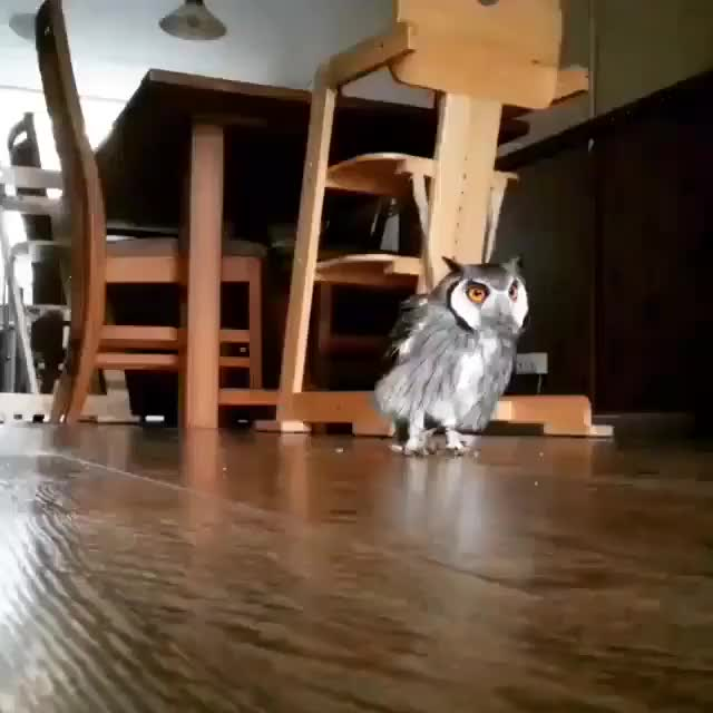 Watch and share Owls GIFs by dredyk on Gfycat
