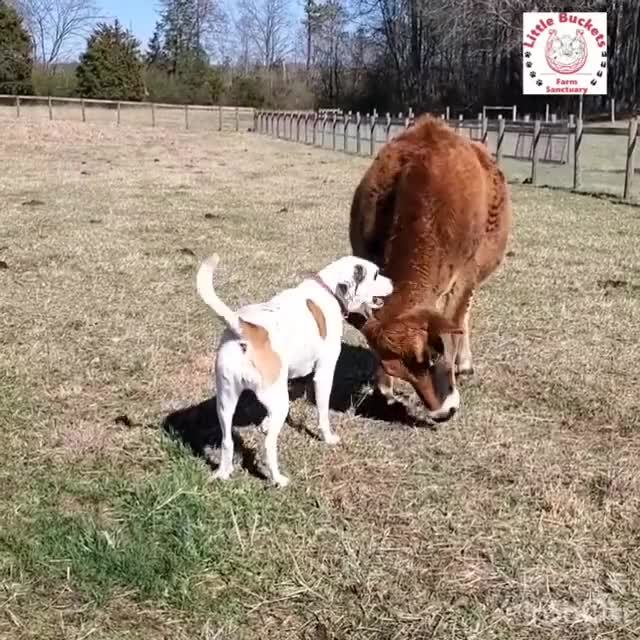 Watch and share Bucketlist GIFs and Animallove GIFs by lnfinity on Gfycat