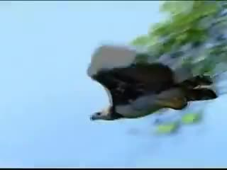 Watch and share Harpy Eagle Snatches A Sloth GIFs on Gfycat