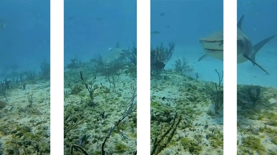 SplitDepthGIFS, sharks, thedepthsbelow, Hayley Williams, Paramore (reddit) GIFs