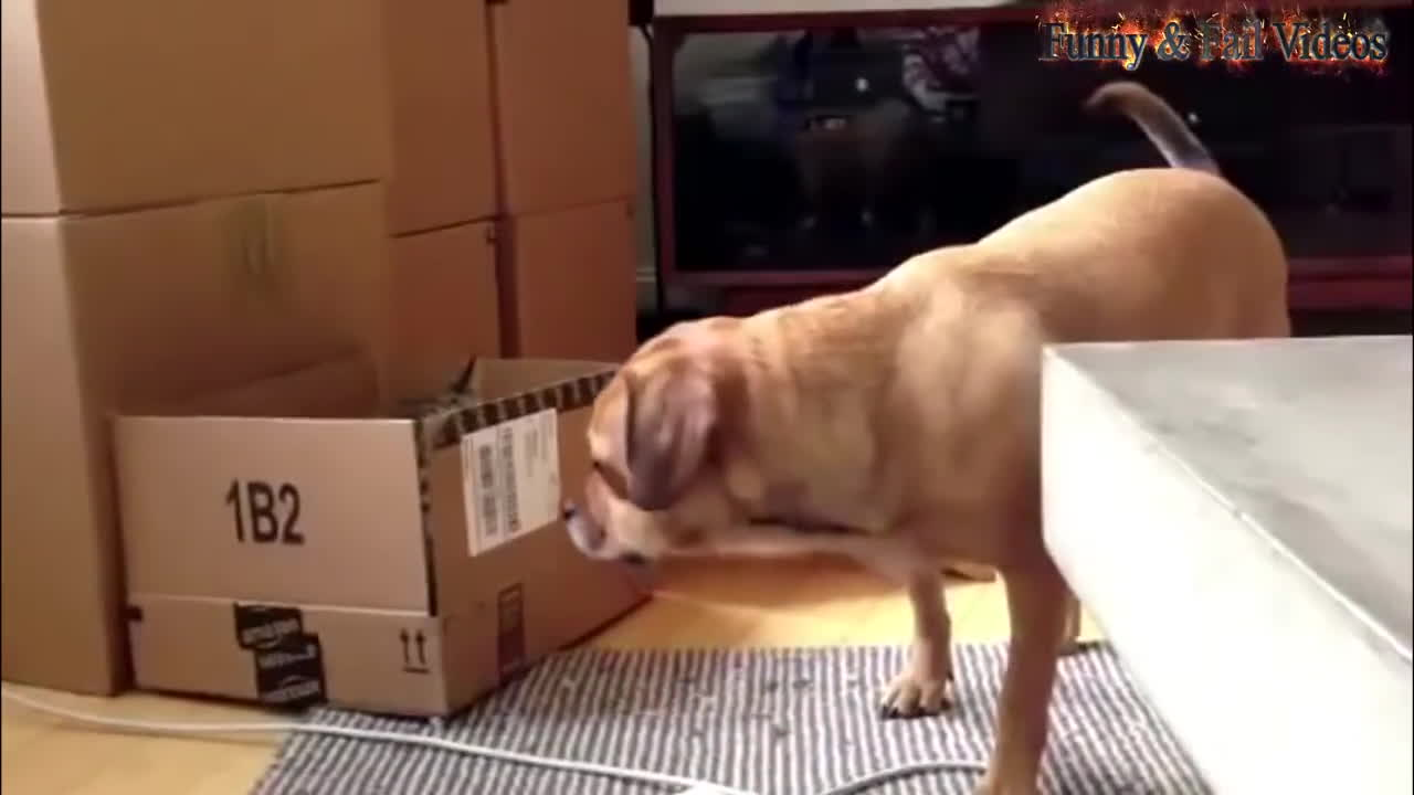 catslaps, gifs, hitmanimals, Funny Cats And Dogs Part 5 - Funny Cats vs Dogs - Funny Animals Compilation GIFs