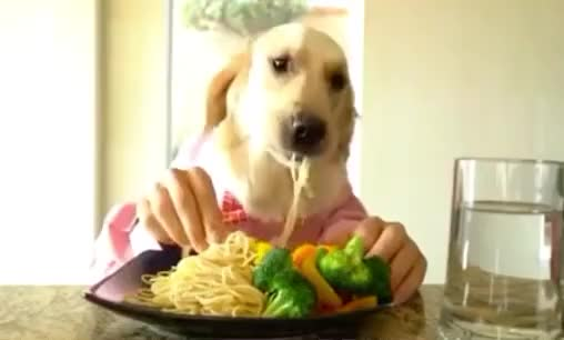 Watch this pasta GIF by GIF Queen (@ioanna) on Gfycat. Discover more day, dinner, dog, food, funny, hands, happy, human, hungry, lunch, national, pasta, spaghetti, yummy GIFs on Gfycat