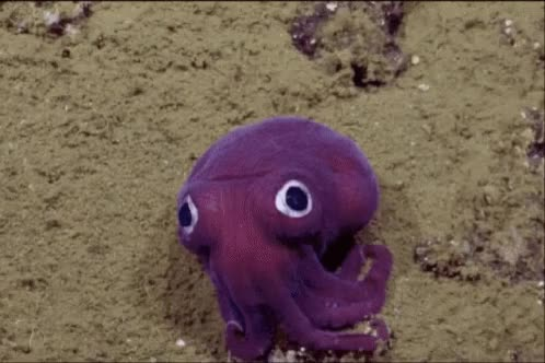 Watch squid GIF on Gfycat. Discover more related GIFs on Gfycat