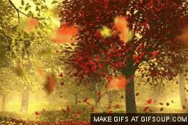 Watch and share Fall (ing Leaves) GIFs on Gfycat
