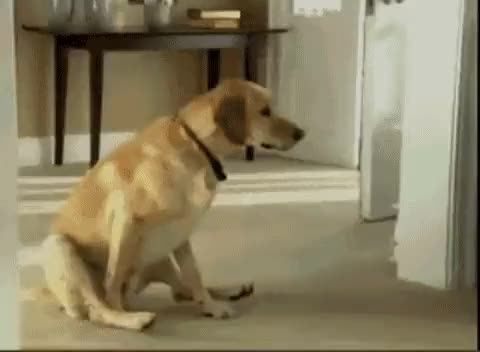 Watch and share Doggy S GIFs on Gfycat