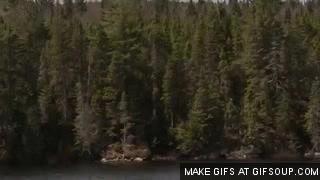 Watch and share Taiga Biomes GIFs on Gfycat