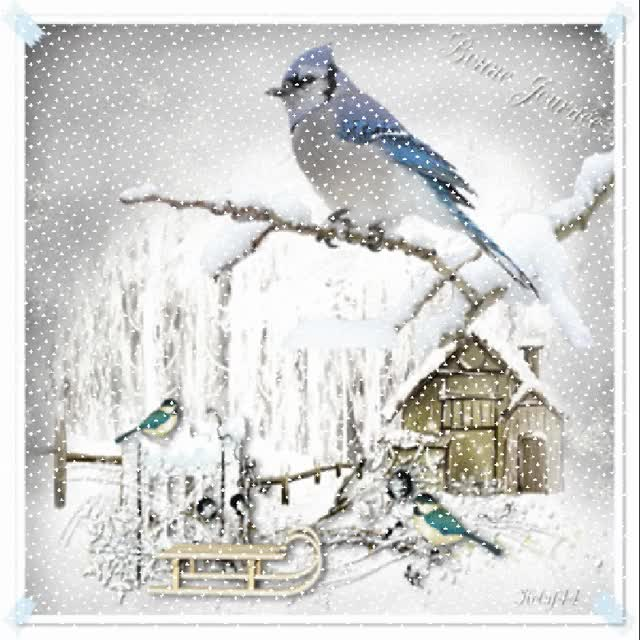 Watch and share L'Hiver Des Petits Oiseaux GIFs on Gfycat