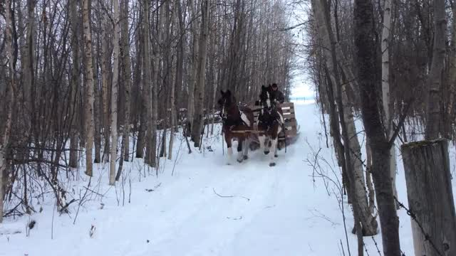 Watch and share Horse Drawn Sleigh GIFs and Horse And Sleigh GIFs by MURRBUCK on Gfycat