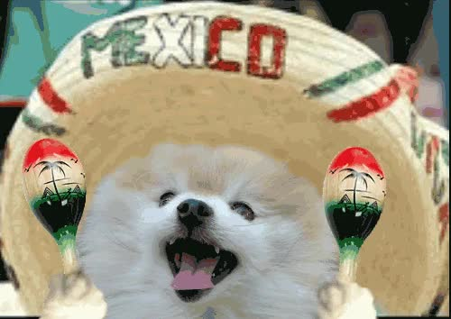 Watch this cinco de mayo GIF by GIF Reactions (@visualecho) on Gfycat. Discover more cincodemayo, happycincodemayo, mexicanindependance day GIFs on Gfycat