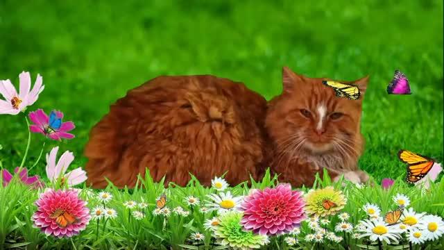 Watch and share Кошка На Цветочном Лугу GIFs by Татьяна on Gfycat