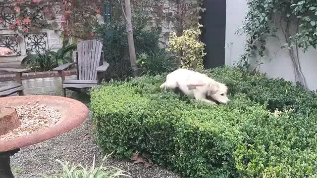 Watch and share When You Were Playing Hide And Go Seek As A Kid And Heard The Seeker Hit The Five Second Countdown. GIFs by HoodieDog on Gfycat
