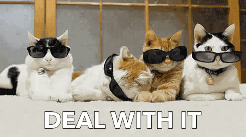 cat, cats, chill, cool, deal, deal with it, funny, it, life, man, pet, relax, sunglasses, thug, with, yo, DEAL WITH IT GIFs