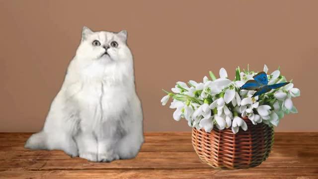 Watch and share Кошка С Подснежниками GIFs by Татьяна on Gfycat