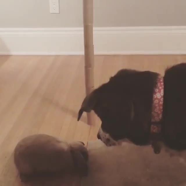 Watch and share Babybunnies GIFs and Petstagram GIFs on Gfycat