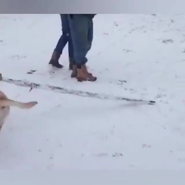 Watch and share Dogs And Snow GIFs by Андрей Дуб on Gfycat