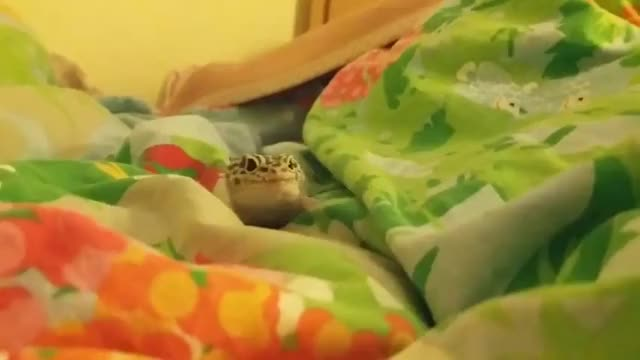 Watch and share Lizards GIFs and Cute GIFs by cakejerry on Gfycat
