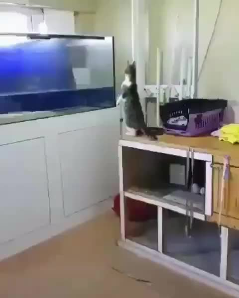 Watch and share This Is Aquarium, Pussy! GIFs by My_Nickname_ISWAT? on Gfycat