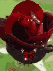 Watch and share Flowers - Animation Newest Pictures Animated GIFs on Gfycat