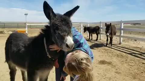 donkey, friendsnotfood, longhopes, longhopes donkey shelter, rescue, sanctuary, Baby donk snuggles at Longhopes Donkey Shelter GIFs