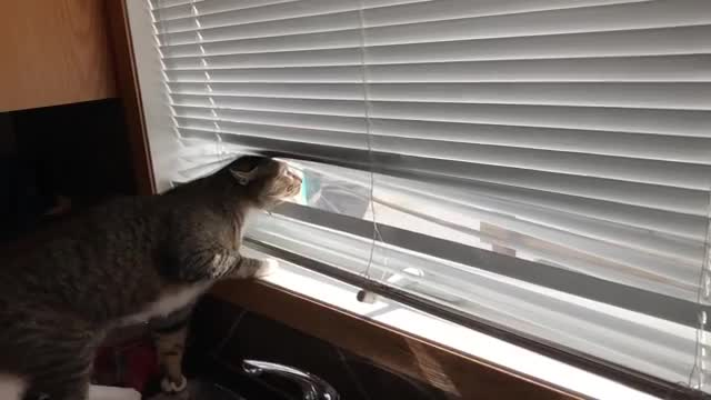 This cat is my Microsoft Word spirit animal GIFs