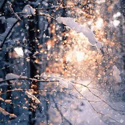 Watch and share Snow Winter Gifs Invierno Nieve GIFs on Gfycat