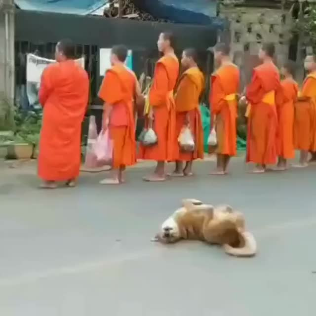Watch and share Enlightend Dog GIFs on Gfycat